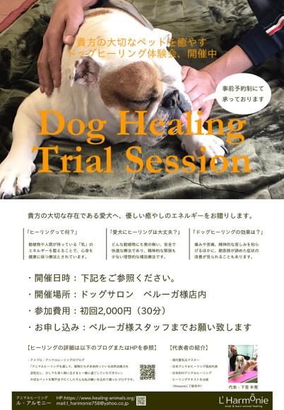 犬のヒーリング店内ポスター600